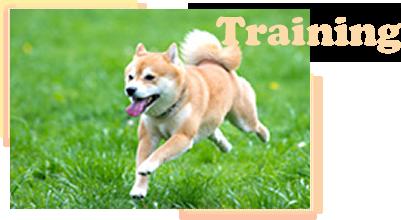 トレーニング(しつけ方教室)