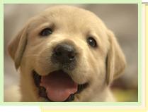 犬の保育園(お預りレッスン